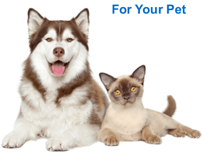 ctfo cbd for pet